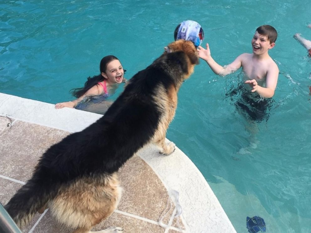 PHOTO: Molly plays in the DeLucas? pool while Haus watches.