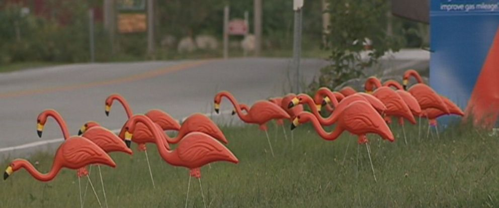 PHOTO: Residents from the Weare, New Hampshire, area are buying and showing off bright flamingo figurines in their yards to support 12-year-old Abby Van Dyke, who is battling cancer.