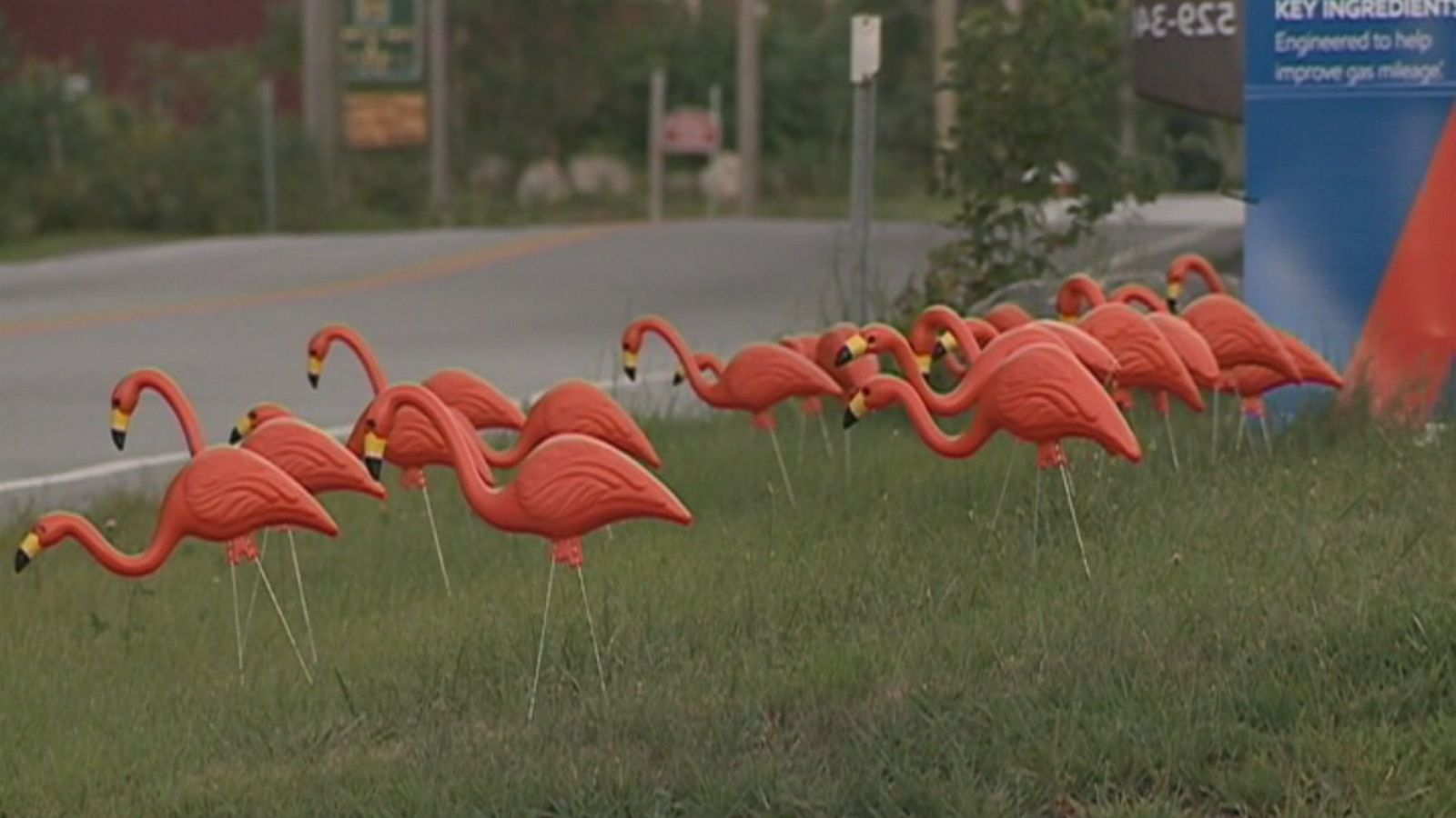 Orange Flamingos Take Over New Hampshire Town For 12 Year Old Girl