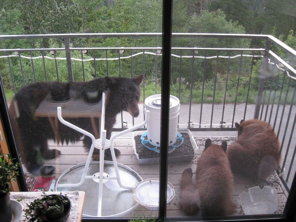 PHOTO: Doug Harder found these bears at his Idaho home in May.