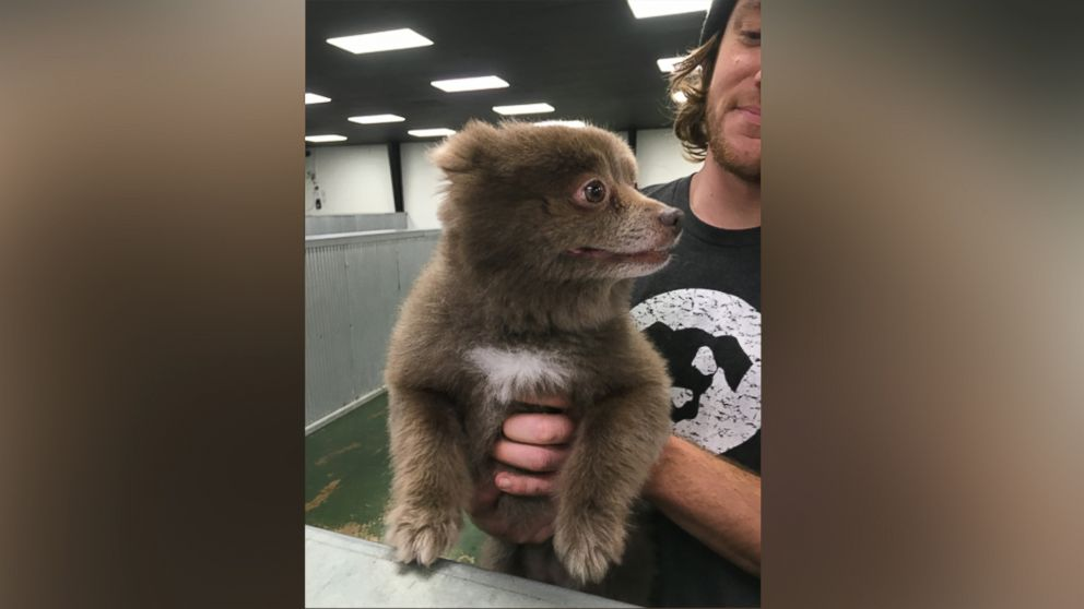 The Mystery Of This Adorable Bear Dog