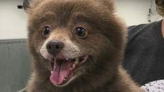 Fantastic Bear Brown Adorable Dog - HT_bear_dog_as_02_160105_16x9t_240  Trends_577060  .jpg