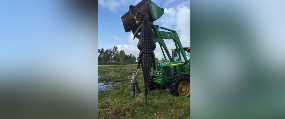 """PHOTO: This image was posted to Outwest Farms, Incs Facebook Page with the caption, """"He measured out at just under 15 foot,"""" April 2, 2016."""