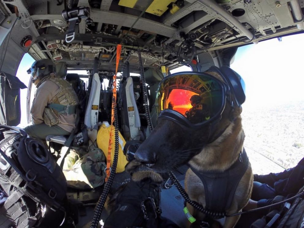 PHOTO: Evy and Ricky are explosive detection dogs with the U.S. Coast Guard. They completed helicopter efficiency training on April 6, 2016.