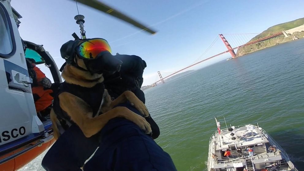 """Evy"" and ""Ricky"" are explosive detection dogs with the U.S. Coast Guard. They completed helicopter efficiency training, April 6, 2016."