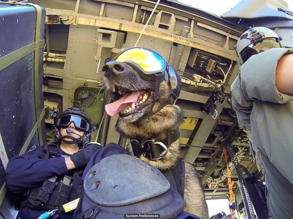Coastie: The Coast Guard Safety Dog