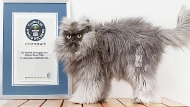 PHOTO: Colonel Meow