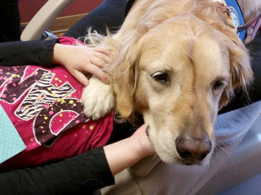 PHOTO: Six-year-old Golden Retriever Jo Jo comforts anxious kids during their dentist appointments at the Pediatric Dentistry of Northbrook in Northbrook, Ill.