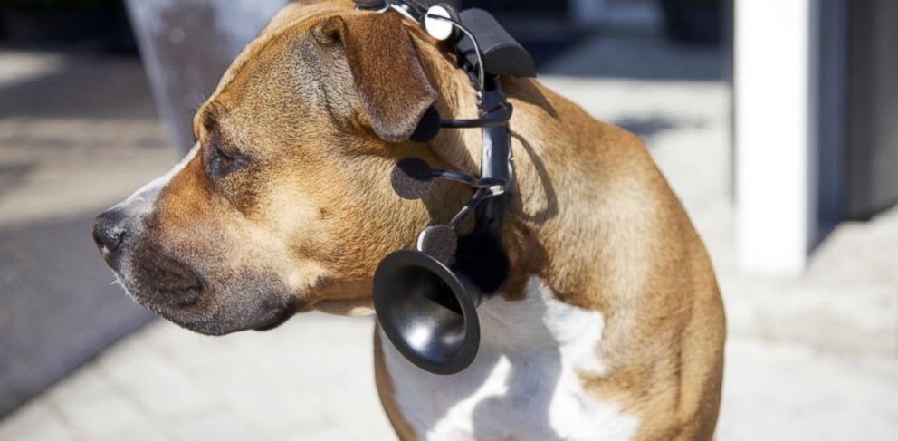 Talking Dog Device Ready to Hit Market Soon