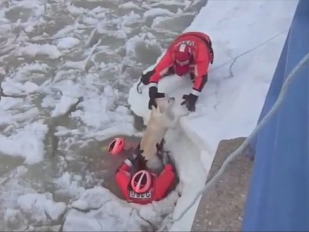 PHOTO: This still is taken from a video showing a Coast Guard ice rescue crew saving a Labrador, who was in the middle of an icy lake connected to Lake Michigan.