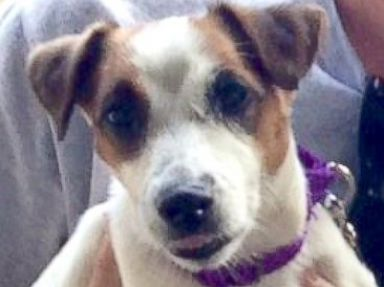 Hawaii Woman Adopts Shelter Dog For 85 Posts It On Craigslist For 200 An Hour Later Abc News