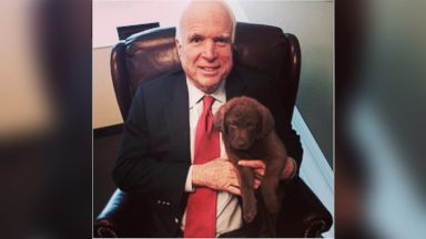 "PHOTO: Senator John McCain shared this photo on Twitter, Jan. 10, 2014, ""Meet our new puppy, a Chesapeake Bay Retriever named Gilley!"""