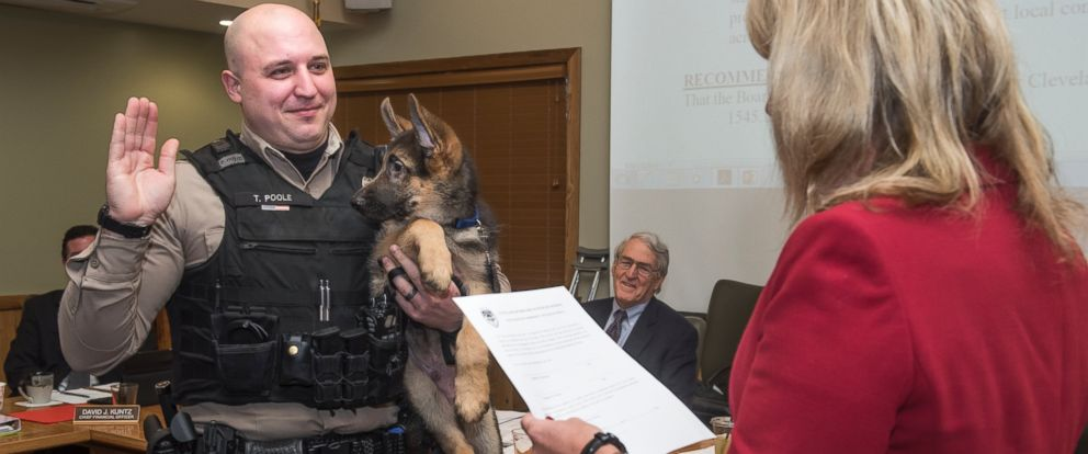 PHOTO: Tyson, a K-9 pup is sworn in along with Cleveland Metroparks Ranger Trevor Poole, Jan. 27, 2016, at the Cleveland Metroparks Administration building, in Cleveland.