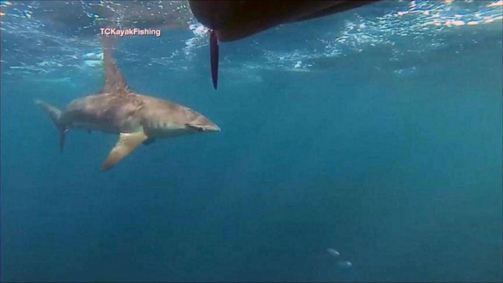 Hammerhead Shark Stalks Florida Kayakers For 2 Miles