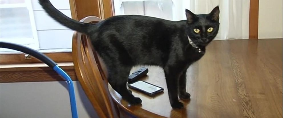 PHOTO: When Riley McDermids cat Sheba went missing from Vallejo, California, she traveled 1,600 miles to Nebraska and hired a private investigator to get her back.