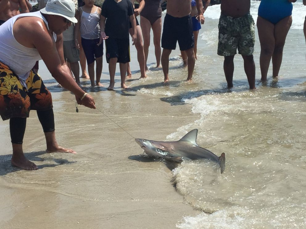 Man catches sharks while fishing in long beach new york for Long beach sport fishing