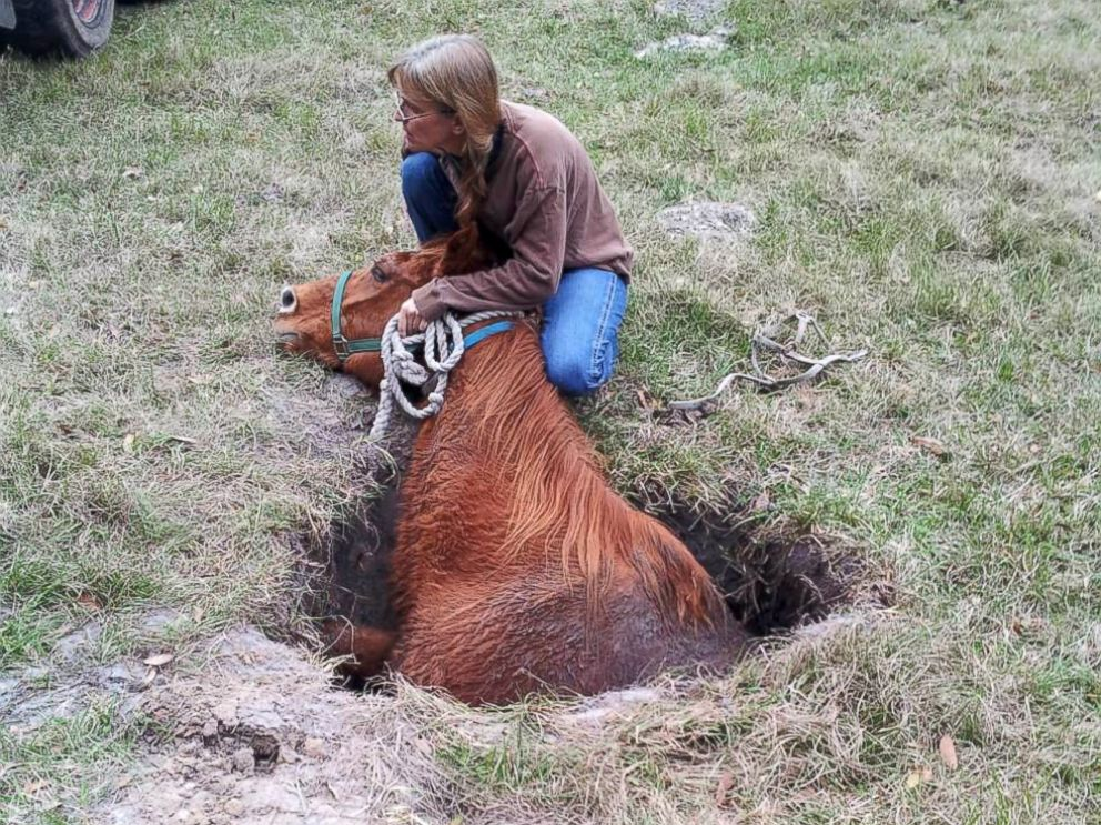 PHOTO: Owner Maryann Marsh tries to comfort Nate the horse once he was found in a sinkhole.