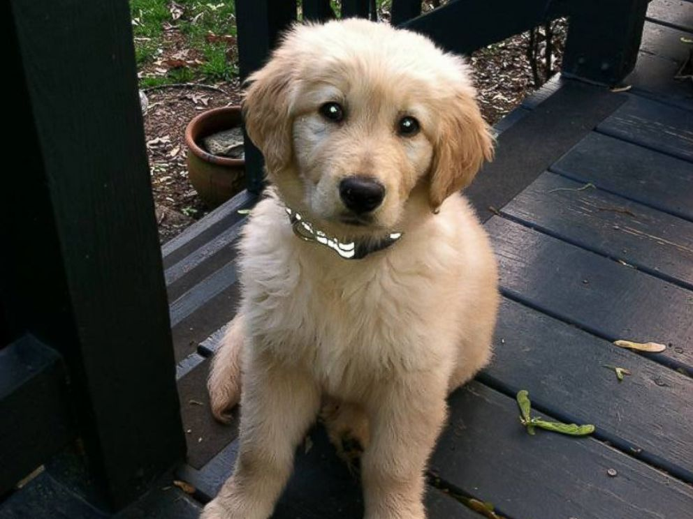 PHOTO: Colby as a puppy.