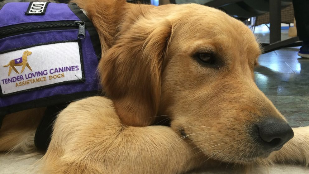 Groups of inmates at the Richard J. Donovan Correctional Facility in San Diego, California, and at the Mule Creek State Prison in Ione, California, are helping train puppies to become service dogs with the help of professionals with Tender Loving Canines Assistance Dogs, Inc.