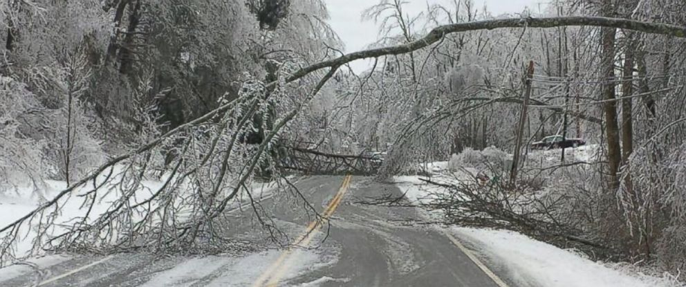 PHOTO: The weight of the ice accumulating on trees across Monterey, Tenn. caused many roads to become impassable.