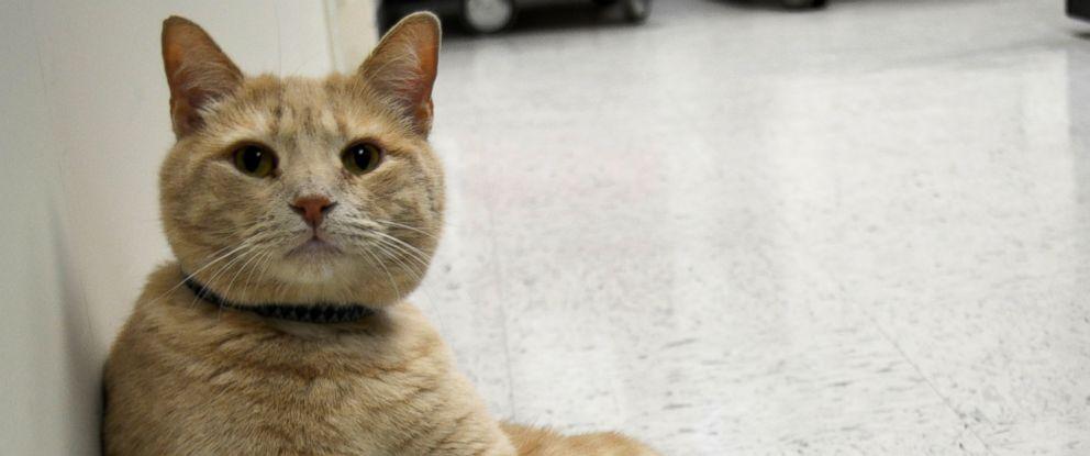 PHOTO: Tom the VA Cat