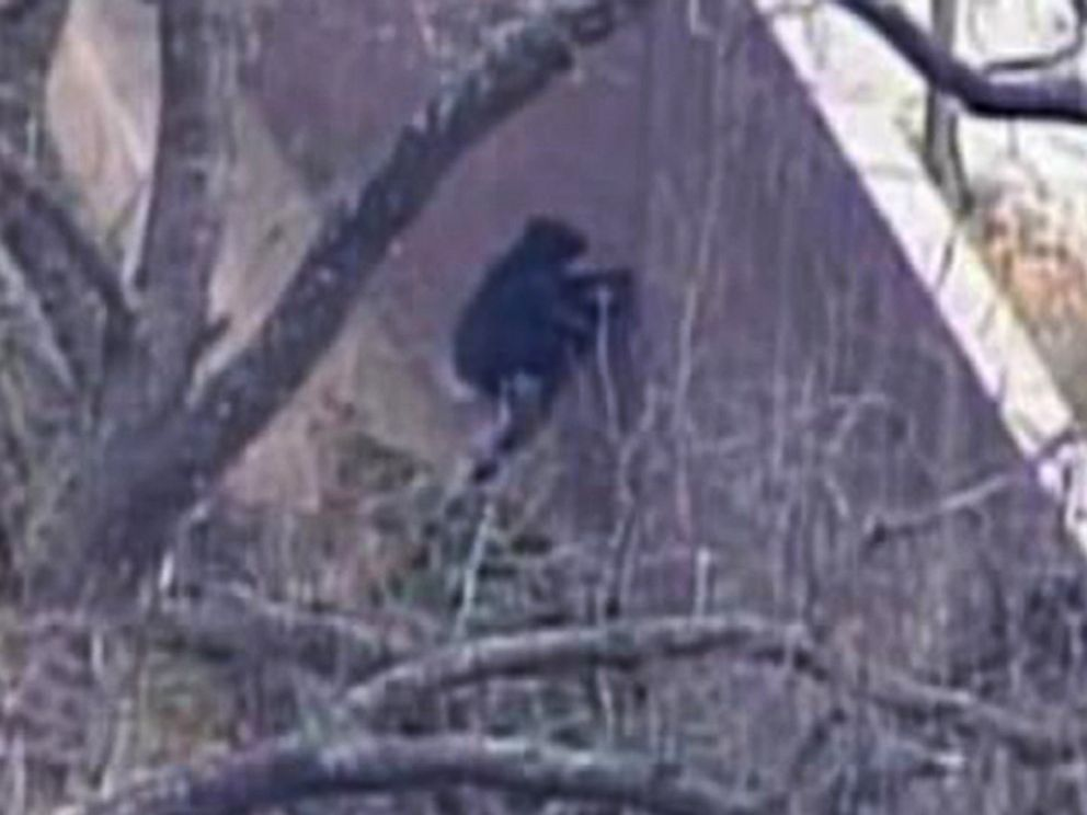 PHOTO: A chimp escaped its enclosure at a zoo in Kansas City, Mo., April 10, 2014.