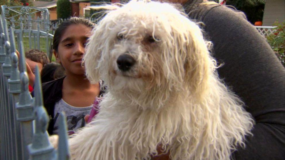 Stranger Buys Stolen Puppy From Craigslist, Returns It to Owner