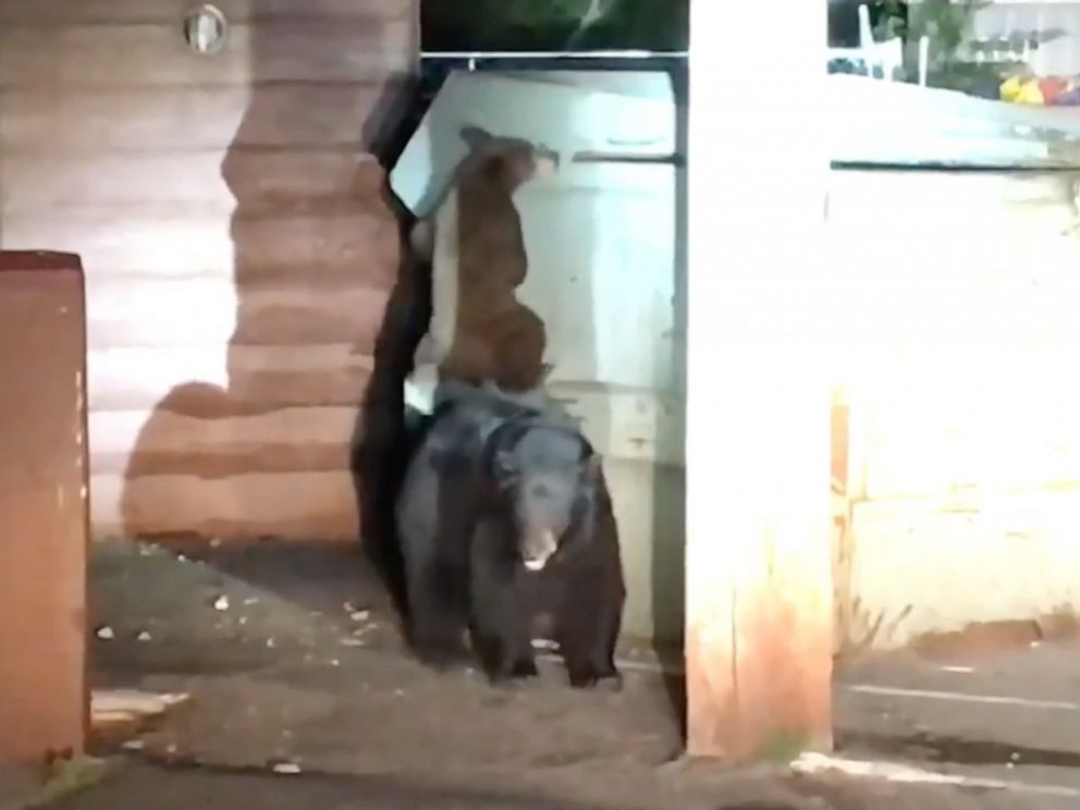 PHOTO: Deputies in Placer County, California, responded to a call of a bear cub trapped in a dumpster at a motel in Kings beach, near Lake Tahoe.