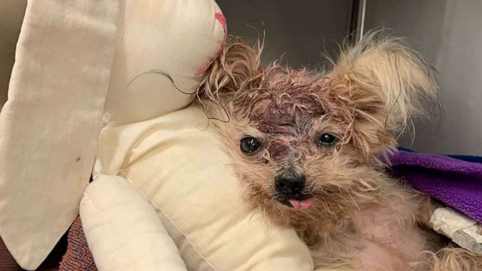 Elderly dog thrown in trash to die after allegedly being beaten by owners