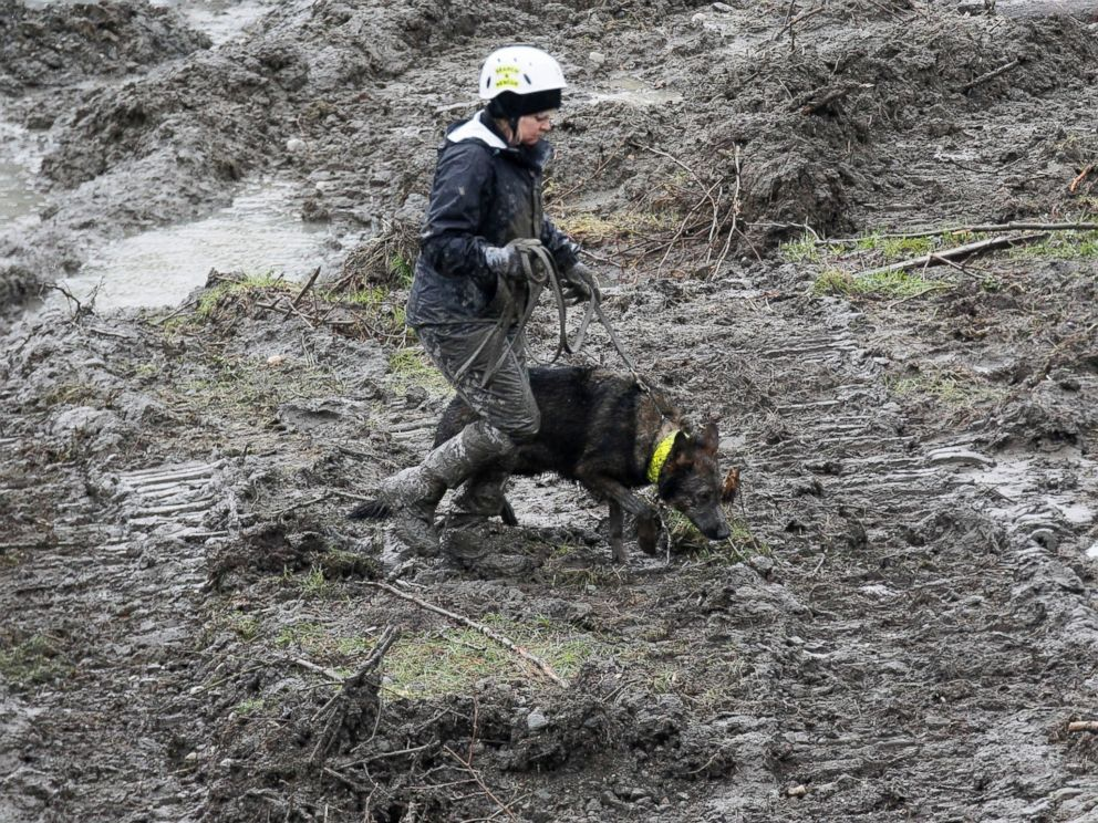 PHOTO: A rescue worker searches for victims of a mudslide with a rescue dog in Oso, Wash., March 30, 2014.