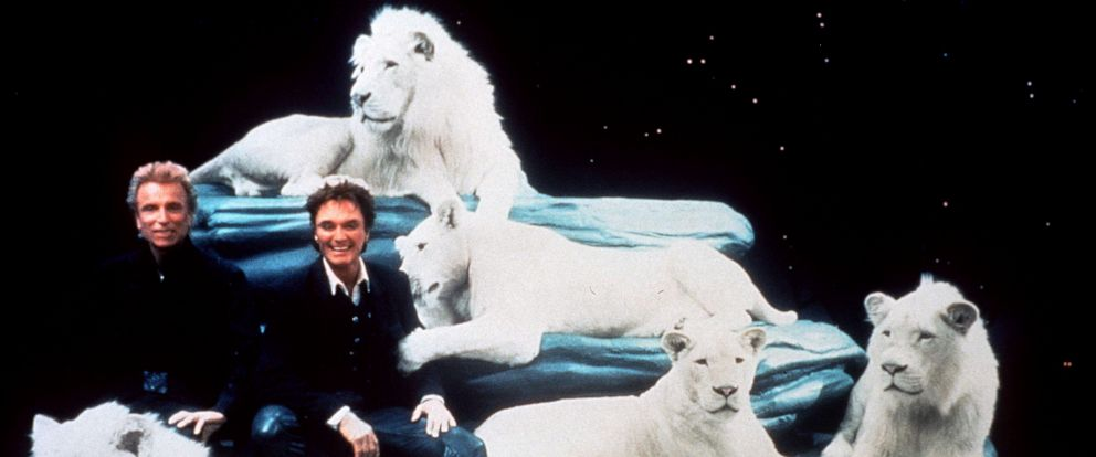 "PHOTO: Siegfried & Roy with their white lions at their Las Vegas Show ""Siegfried & Roy: The Magic Box,"" in 1999."