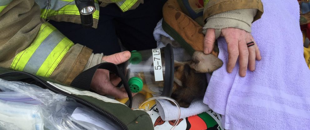 PHOTO: Firefighters help save three puppies from a fire in Henrico Co. Virginia on Jan. 25, 2016.