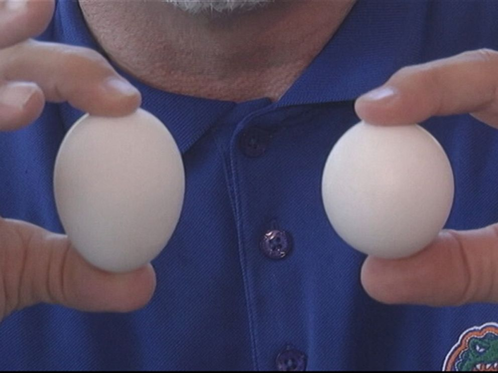 PHOTO: Steve Holloway first thought the carton of eggs he bought at a Florida supermarket contained a golf ball.