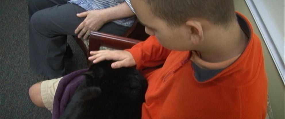 PHOTO: Andy was a stray cat Kim Neff brought home for her grandson Josh, who has Aspergers.