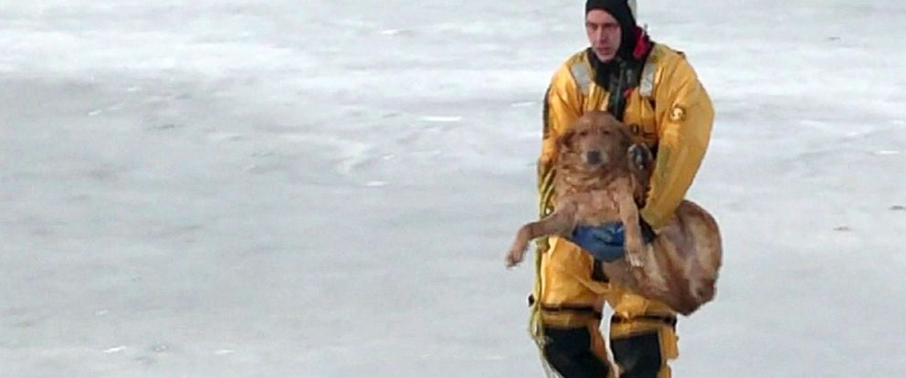 PHOTO: A fireman from the White Lake Fire Dept. carries a dog that he rescued that had fallen through the ice.