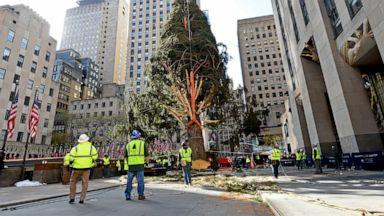 77 Foot Tree Installed At New York City S Rockefeller Center Abc News