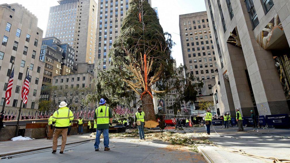 77-foot tree installed at New York City's Rockefeller Center - ABC News