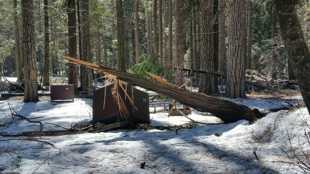 In this photo released Wednesday, March 13, 2019, by the National Park Service, is a damaged bear box after the recent heavy snowpack in Yosemite National Park, Calif. The park announced that there will be late seasonal openings to facilities due to the exceptionally heavy snowpack and the subsequent extensive damage to many park facilities. (NPS Photo via AP)