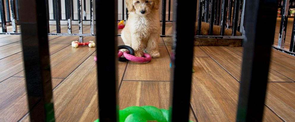 Maryland pet stores sue to block state ban on dog, cat sales
