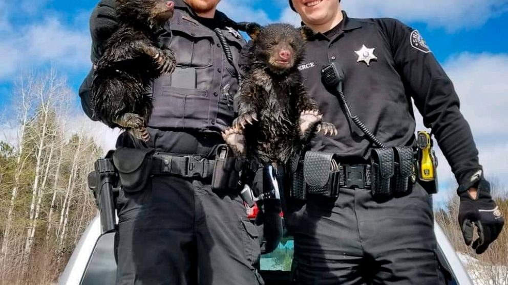 Deputies rescue 2 wailing bear cubs trapped in flooded den