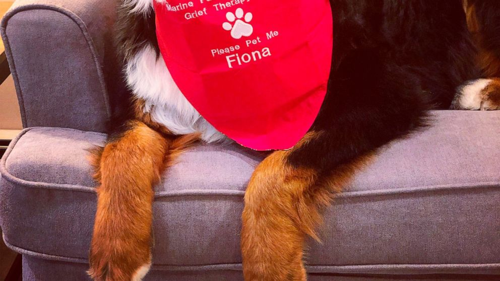 Nyc Funeral Home Dog Is 1 Millionth Canine Good Citizen