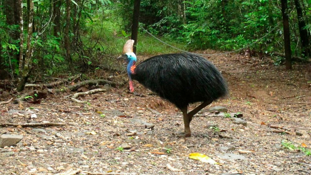 Large, exotic bird that killed Florida man to be auctioned