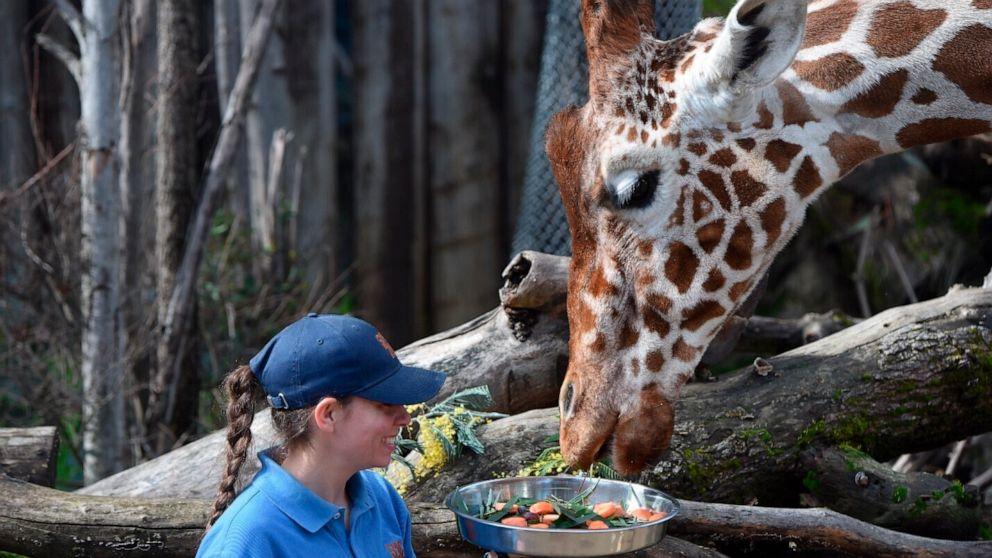 Sacramento Zoo temporarily closed after giraffe died thumbnail