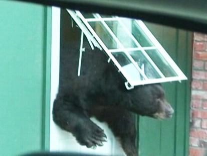 Video: Black bear caught on tape smashing through hotel door.