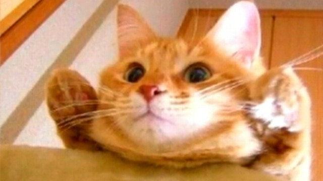 VIDEO: Missing cat from California had been missing for almost two months.