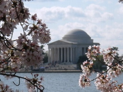 VIDEO: A closer look at the National Cherry Blossom Festival in Washington, D.C.