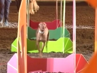 Video: Dogs compete at the National Western Stock Show in Denver.