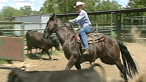 PHOTO Cattle rustling is on the rise. In Texas alone, more than 6,000 heads of cattle were stolen last year.