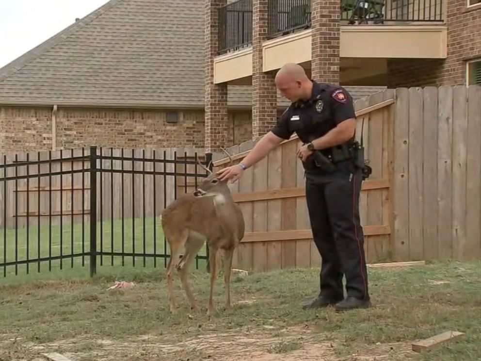 Deer Rescued After Being Found Tied Up Behind Construction