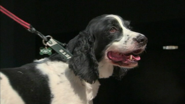 PHOTO: A dog ended up on a flight to Ireland instead of his native Phoenix, Ariz. after he was mistakenly put on the wrong flight from Newark, N.J.
